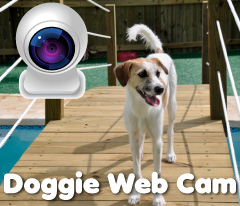 doggie-webcam