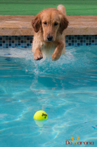 golden-pool-ball-jump
